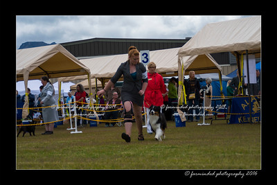 DS5_9359-12x18-06_2016-Dog_Show