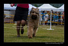 DS5_9778-12x18-06_2016-Dog_Show