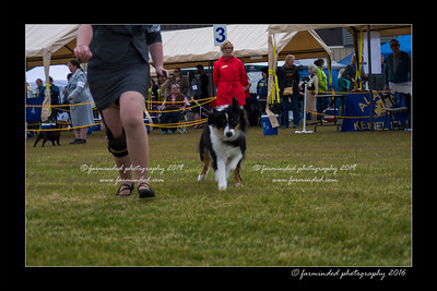 DS5_9366-12x18-06_2016-Dog_Show