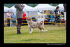 DS5_9753-12x18-06_2016-Dog_Show