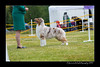 DS5_9752-12x18-06_2016-Dog_Show