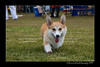 DS5_9872-12x18-06_2016-Dog_Show
