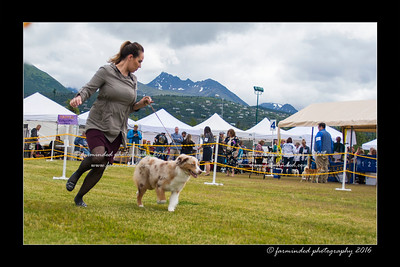 DS5_9409-12x18-06_2016-Dog_Show