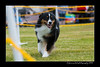 DS5_9736-12x18-06_2016-Dog_Show