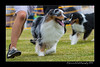 DS5_9733-12x18-06_2016-Dog_Show