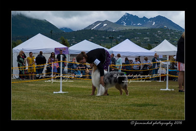 DS5_9319-12x18-06_2016-Dog_Show