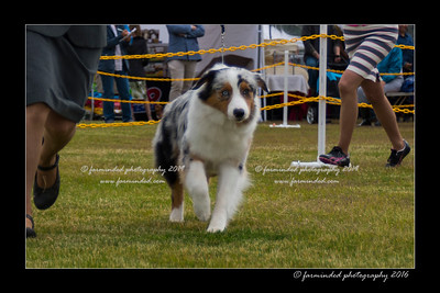 DS5_9372-12x18-06_2016-Dog_Show