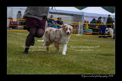 DS5_9453-12x18-06_2016-Dog_Show
