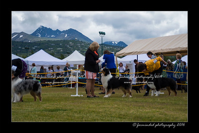 DS5_9321-12x18-06_2016-Dog_Show