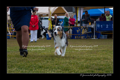 DS5_9482-12x18-06_2016-Dog_Show