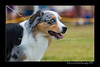 DS5_9748-12x18-06_2016-Dog_Show