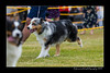 DS5_9746-12x18-06_2016-Dog_Show