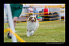 DS5_9729-12x18-06_2016-Dog_Show
