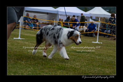 DS5_9456-12x18-06_2016-Dog_Show