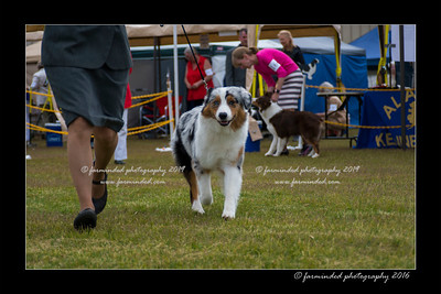 DS5_9393-12x18-06_2016-Dog_Show
