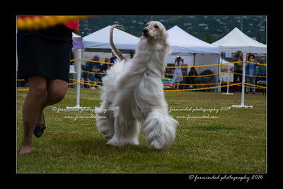 DS5_9824-12x18-06_2016-Dog_Show