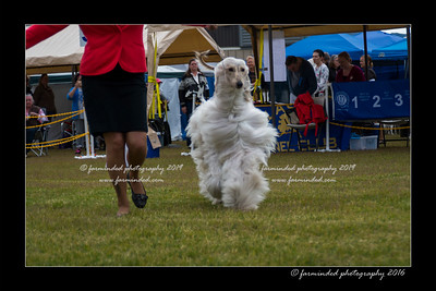 DS5_9832-12x18-06_2016-Dog_Show