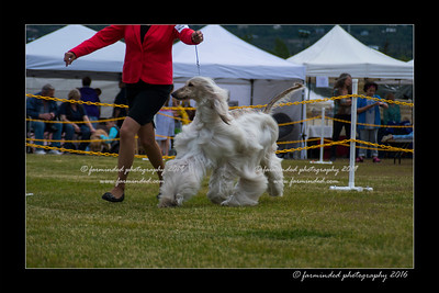 DS5_9820-12x18-06_2016-Dog_Show