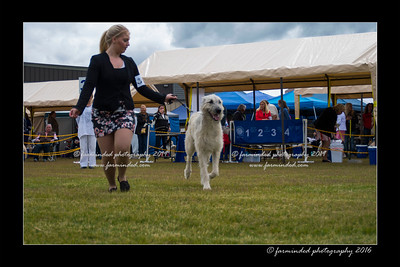 DS5_9812-12x18-06_2016-Dog_Show