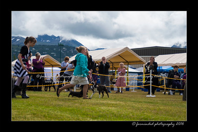 DS5_9118-12x18-06_2016-Dog_Show