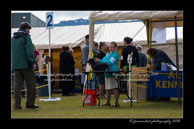 DS5_9091-12x18-06_2016-Dog_Show