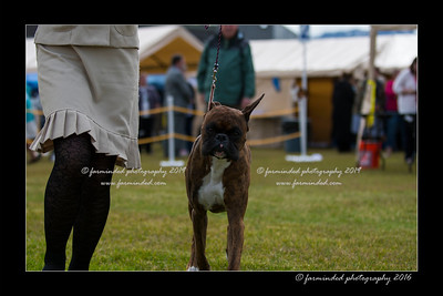 DS5_9000-12x18-06_2016-Dog_Show
