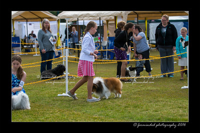 DS5_8986-12x18-06_2016-Dog_Show