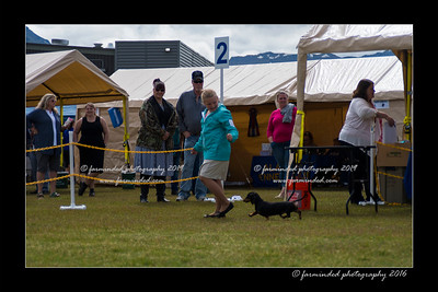DS5_9109-12x18-06_2016-Dog_Show