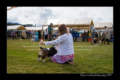 DS5_9073-12x18-06_2016-Dog_Show
