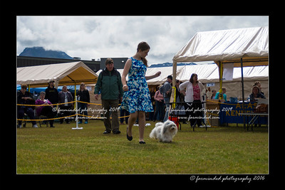 DS5_9042-12x18-06_2016-Dog_Show