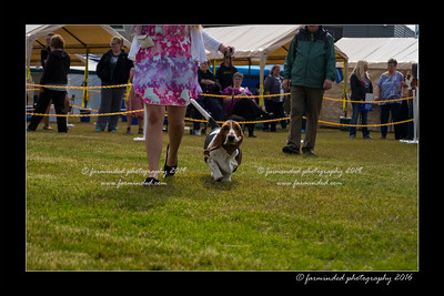 DS5_9054-12x18-06_2016-Dog_Show