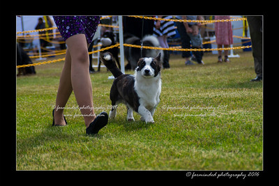 DS5_9123-12x18-06_2016-Dog_Show