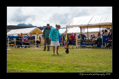 DS5_9095-12x18-06_2016-Dog_Show