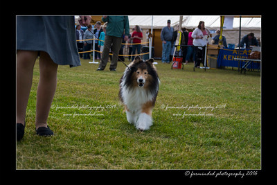 DS5_9012-12x18-06_2016-Dog_Show