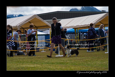 DS5_9119-12x18-06_2016-Dog_Show