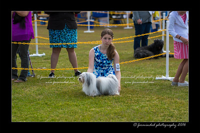 DS5_8985-12x18-06_2016-Dog_Show