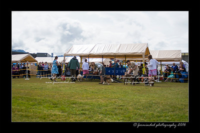 DS5_9074-12x18-06_2016-Dog_Show