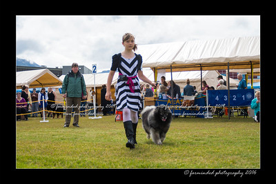 DS5_9089-12x18-06_2016-Dog_Show