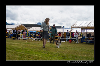 DS5_9009-12x18-06_2016-Dog_Show