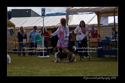 DS5_9071-12x18-06_2016-Dog_Show