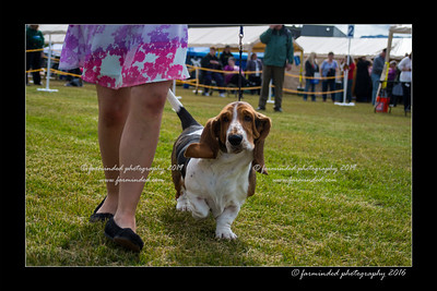 DS5_9060-12x18-06_2016-Dog_Show