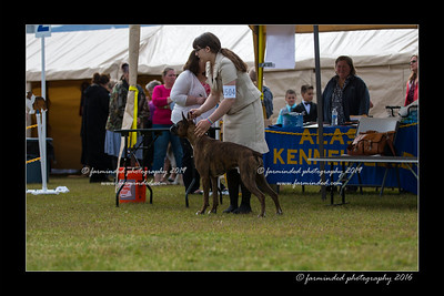 DS5_8995-12x18-06_2016-Dog_Show