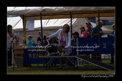 DS5_9046-12x18-06_2016-Dog_Show