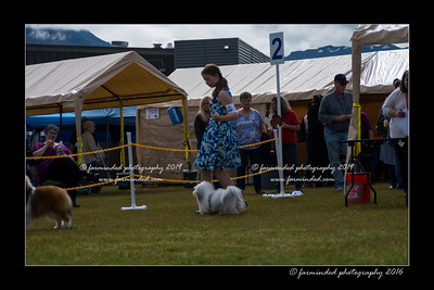 DS5_9070-12x18-06_2016-Dog_Show