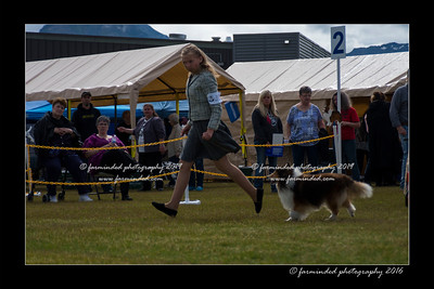 DS5_9064-12x18-06_2016-Dog_Show