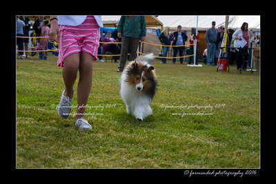 DS5_9031-12x18-06_2016-Dog_Show