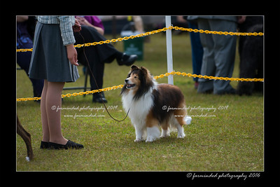 DS5_8993-12x18-06_2016-Dog_Show