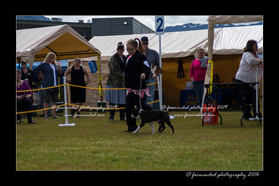 DS5_9113-12x18-06_2016-Dog_Show