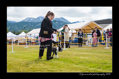 DS5_9084-12x18-06_2016-Dog_Show