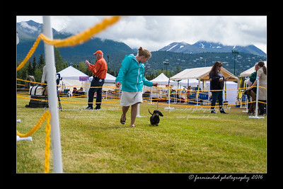 DS5_9081-12x18-06_2016-Dog_Show